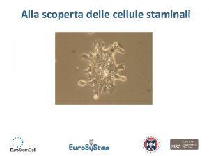 Alla scoperta delle cellule staminali Alla fine della