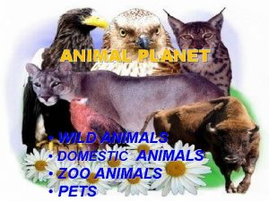 ANIMAL PLANET WILD ANIMALS DOMESTIC ANIMALS ZOO ANIMALS