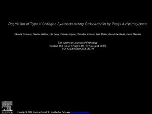 Regulation of Type II Collagen Synthesis during Osteoarthritis