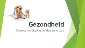 Gezondheid Diersoortverdieping honden en katten Leerdoelen Gezondheid De
