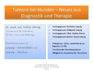 Tumore bei Hunden Neues aus Diagnostik und Therapie